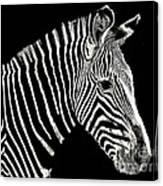 Zebra Faa Contest Canvas Print