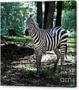 Zebra Forest 2 Canvas Print