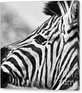 Zebra Head Profile Canvas Print