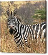 Zebra In Serengeti Canvas Print