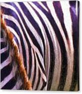 Zebra Lines Canvas Print