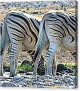 Zebra Lineup Canvas Print