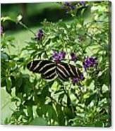 Zebra Longwing Butterfly On Flower Canvas Print