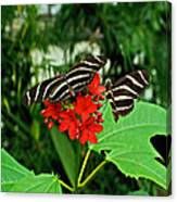 Zebra Longwing Ins 39 Canvas Print