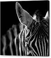 Portrait Of Zebra In Black And White Canvas Print