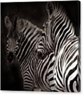 Zebra Night Canvas Print
