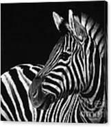 Zebra No. 3 Canvas Print