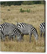 Zebra On Masai Mara Plains Canvas Print