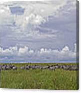 Zebra Panorama - 12x64 Canvas Print