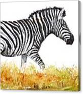 Zebra Panoramic Canvas Print