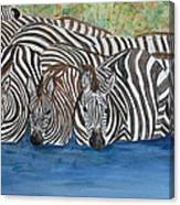 Zebra Pool Canvas Print