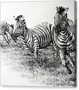Zebra Running Canvas Print