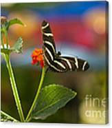 Zebra Striped Butterflies Canvas Print