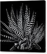 Zebra Succulent Canvas Print