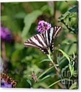 Zebra Swallowtail Butterfly In Garden Canvas Print