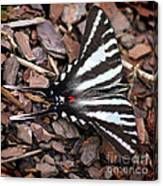 Zebra Swallowtail Butterfly Square Canvas Print