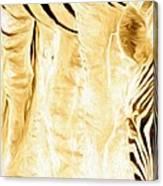 Zebra Up Closer Canvas Print