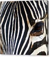 Zebra Vibrations Canvas Print