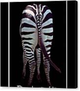 Zebra Wisdom Canvas Print