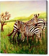 Zebras At Ngorongoro Crater Canvas Print