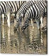 Zebras At Water Hole Canvas Print