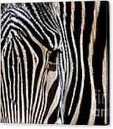 Zebras Face To Face Canvas Print