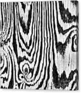 Zebras In Wood Canvas Print