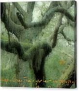 Zen Forest Canvas Print