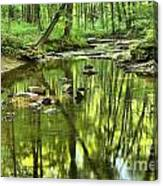 Zen In The Forest Canvas Print