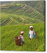 Zhuang Minority Women Walk Through Rice Canvas Print