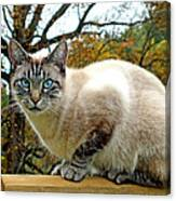 Zing The Cat In The Fall Canvas Print