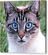 Zing The Cat Looking At Us Canvas Print