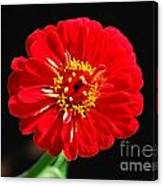 Zinnia Red Flower Floral Decor Macro Accented Edges Digital Art Canvas Print