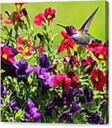 Zipping Through The Garden Canvas Print