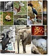 Zoo Collage Canvas Print