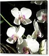 Zoo Orchid Canvas Print