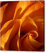 Zowie Rose Canvas Print