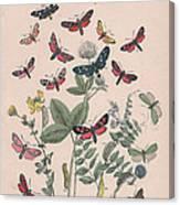 Zygaenidae - Syntomidae Canvas Print