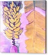 Florida Apple Bananas - 1 Canvas Print