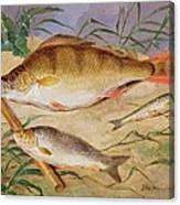 An Angler's Catch Of Coarse Fish Canvas Print