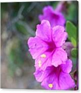 Arizona Wildflower Canvas Print