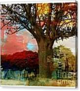 Baobab Canvas Print