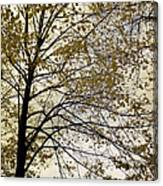 Branch Of Tree In Autumn Canvas Print