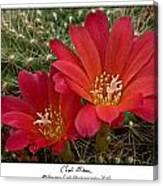 Cacti Bloom Canvas Print