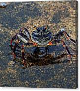 Crab And Reflection Canvas Print