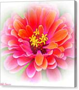 Flower On White Canvas Print