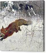 Fox Being Chased Through The Snow  Canvas Print
