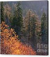 Great Smoky Mountains Morning Canvas Print
