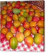 Just Picked Florida Mangoes Canvas Print