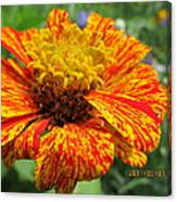 Lovely Orange Speckles Canvas Print